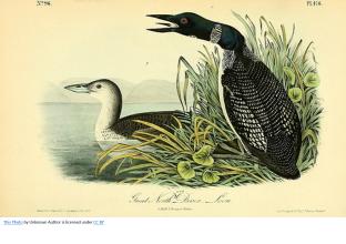 JJ Audubon Sketch 3